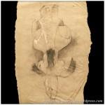 Portfolio Archive - Still Life - Skull