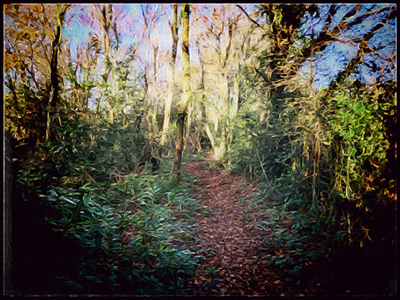 all-counties-craft-challenge-a-winter-woodland-walk