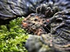 micro-photography-1