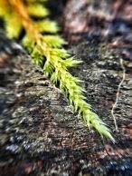 micro-photography-10