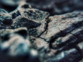 micro-photography-11