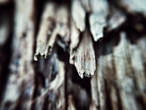 micro-photography-2
