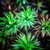 micro-photography-3