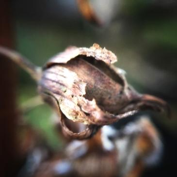 micro-photography-4