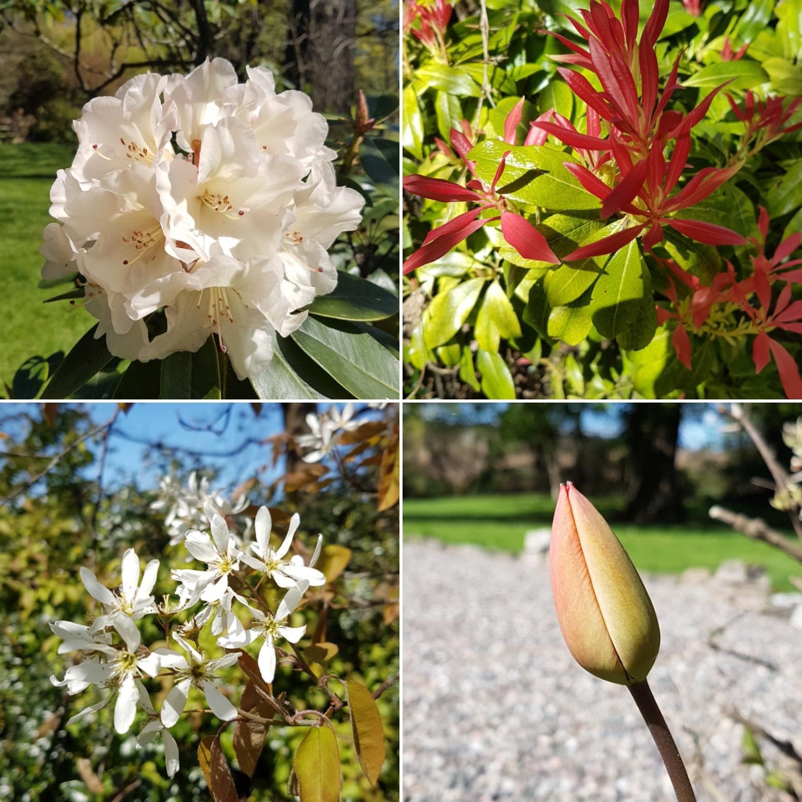 Various pictures of my garden.